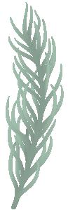 Cedar plant branch